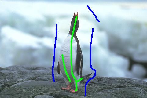 Segmentation image